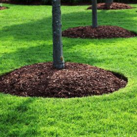 importance of mulch around trees
