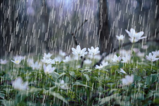 excessive rain and what it does to your lawn